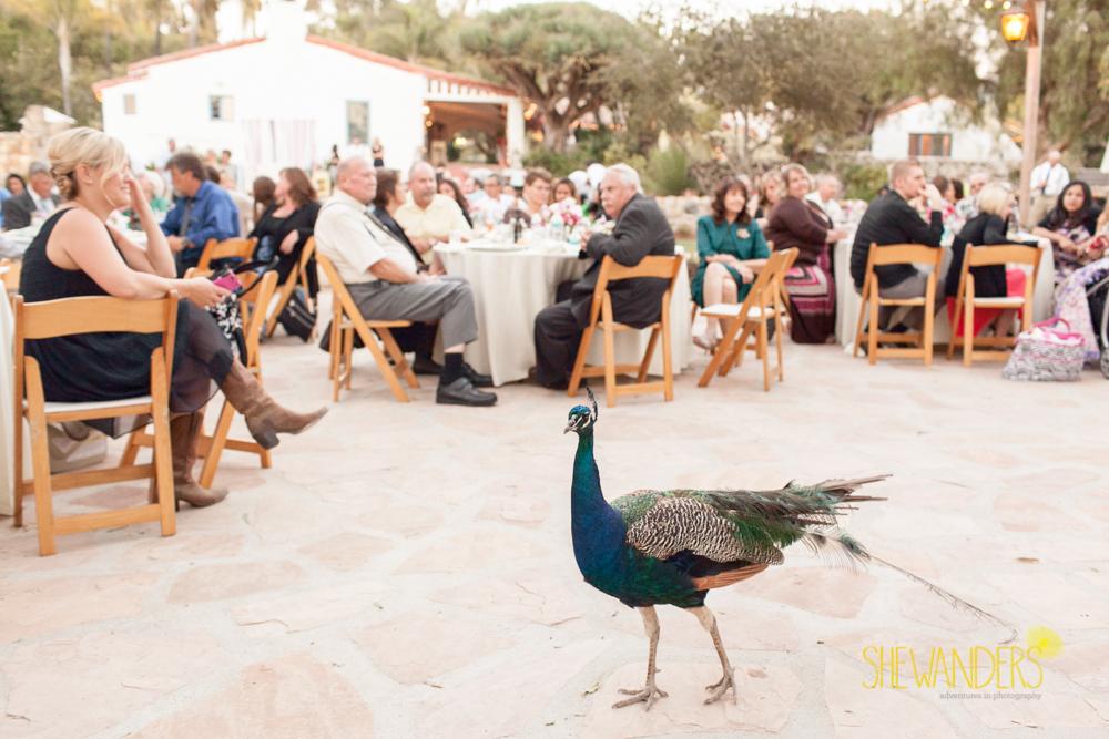 SHEWANDERS.weddings.2012105