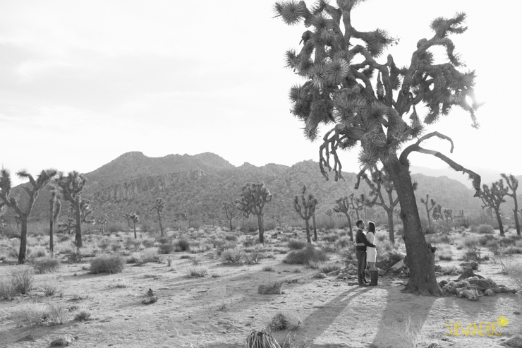SheWanders Photography, landscape, black and white, LUXE Events, Joshua tree,
