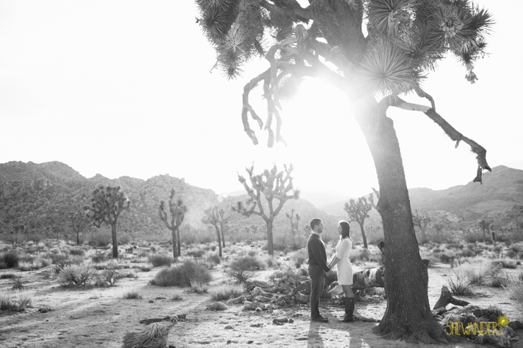 SheWanders Photography, landscape, joshua tree, black and white, landscape, sun, mystical, hand holding