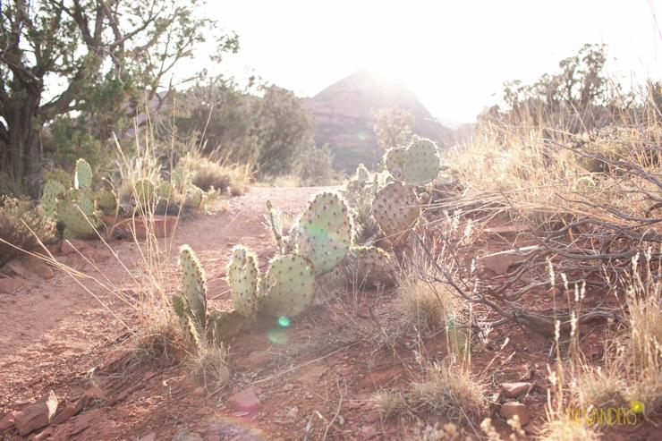 218.shewanders.arizona