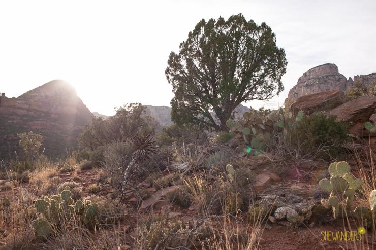222.shewanders.arizona