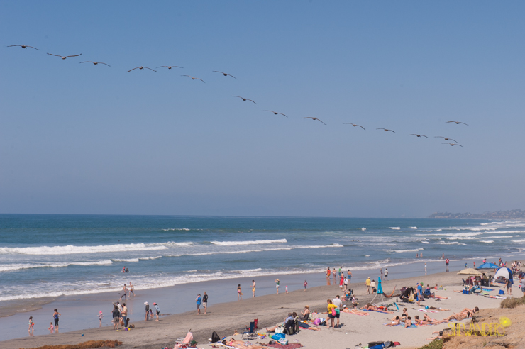 beach, birds, sky,del mar wedding photography, shewanders wedding photography, root 75, luxe events, miho gastropub,