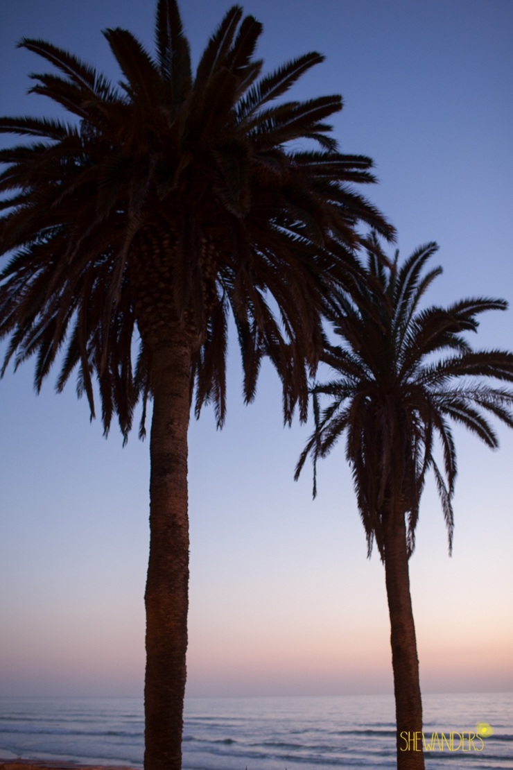 palm trees, sunset, sky,del mar wedding photography, shewanders wedding photography, root 75, luxe events, miho gastropub,