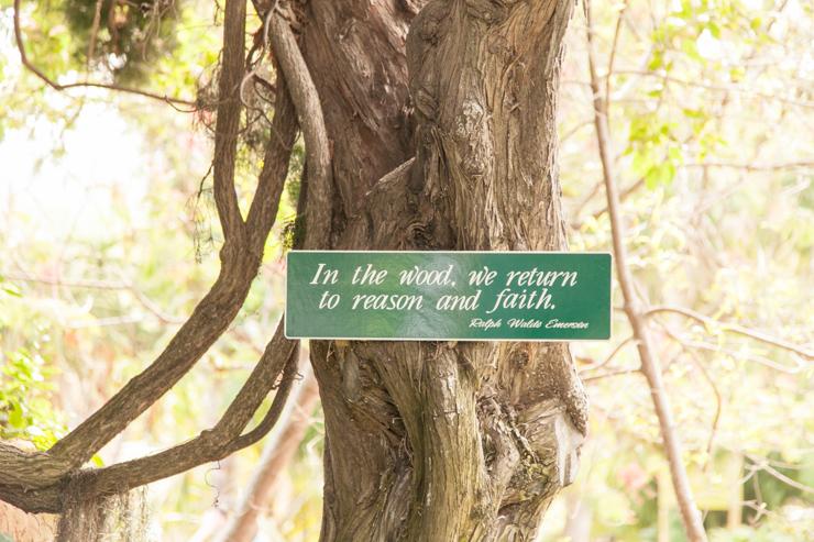 shewanders.san.diego.botanical.gardens116