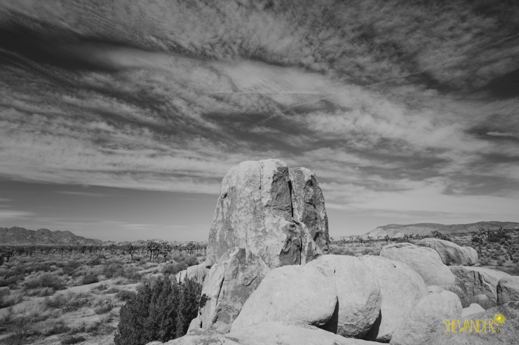 climb any mountain, darling, shewanders wedding photography, joshua tree wedding photography, joshua tree landscapes, i dream of jeanie