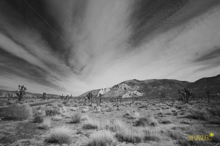 shewanders wedding photography, joshua tree wedding photography, joshua tree landscapes, i dream of jeanie