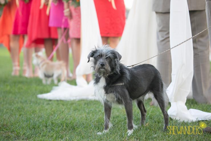 shewanders.wedding.photography.san.diego485
