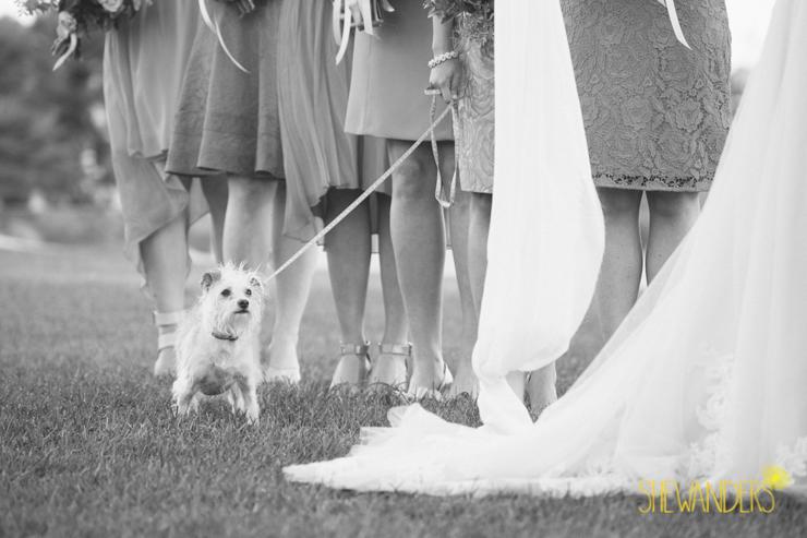 shewanders.wedding.photography.san.diego486