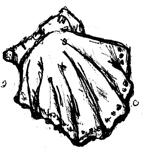 shell drawing 2.jpg