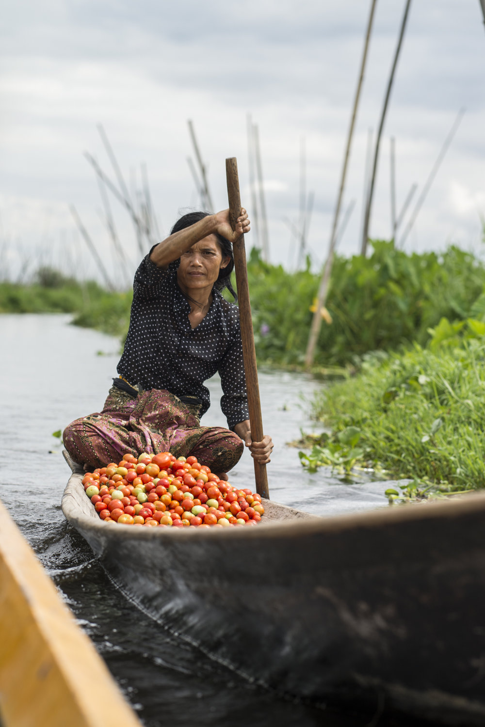 A burmese woman is bringing a batch of tomatoes to the market.  The tomatoes are grown on the surface of the lake, and also known as floating gardens.