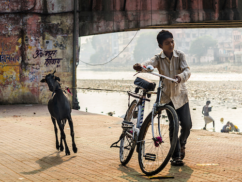 I saw this boy struggled and determined to bring this stubborn goat back home in Haridwar.