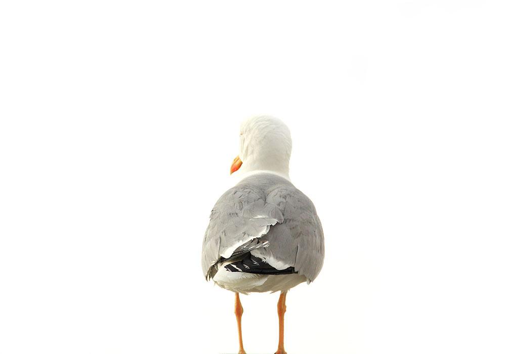 pigeonincapri_cover.jpg