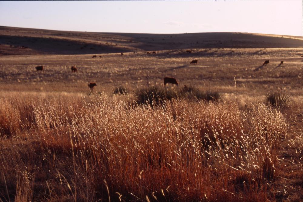 Ranch 6-2.jpg