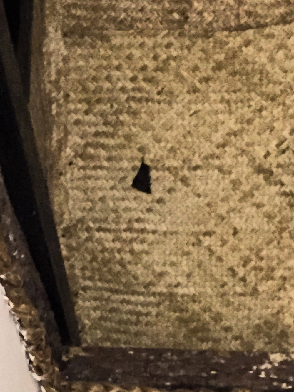 A friendly black bat keeping me company in my room.