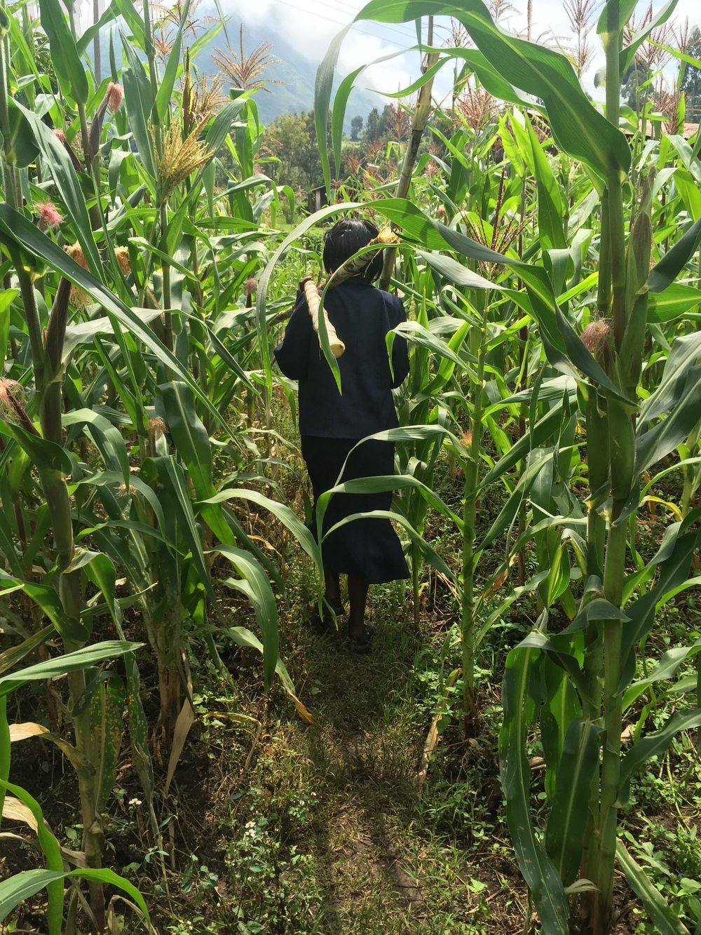 Helen walking back to the outreach with the 3 sugarcane stalks