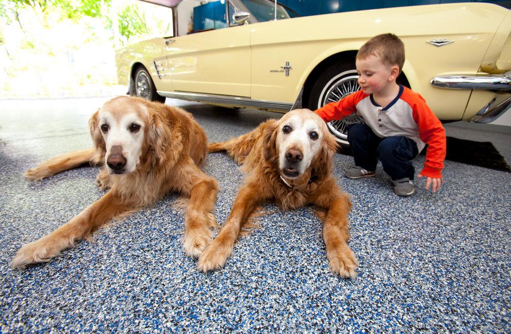 denim yellow car with dogs.jpg