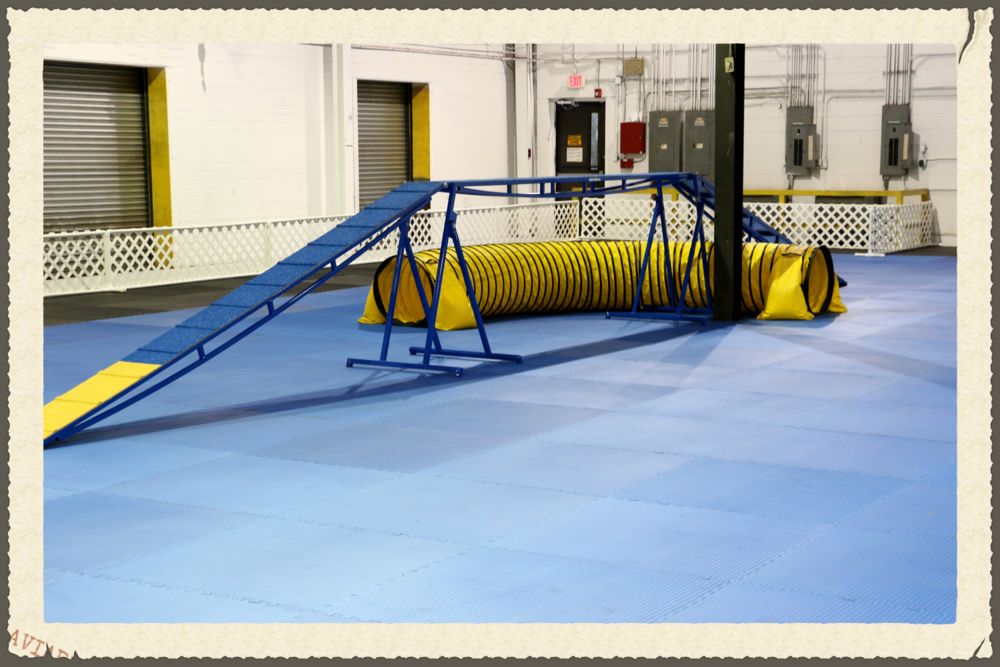 INDOOR AGILITY FIELD - Photo by Theresa menz cooper