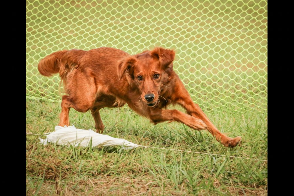 - Coursing Ability Test & FAST CAT Premiums