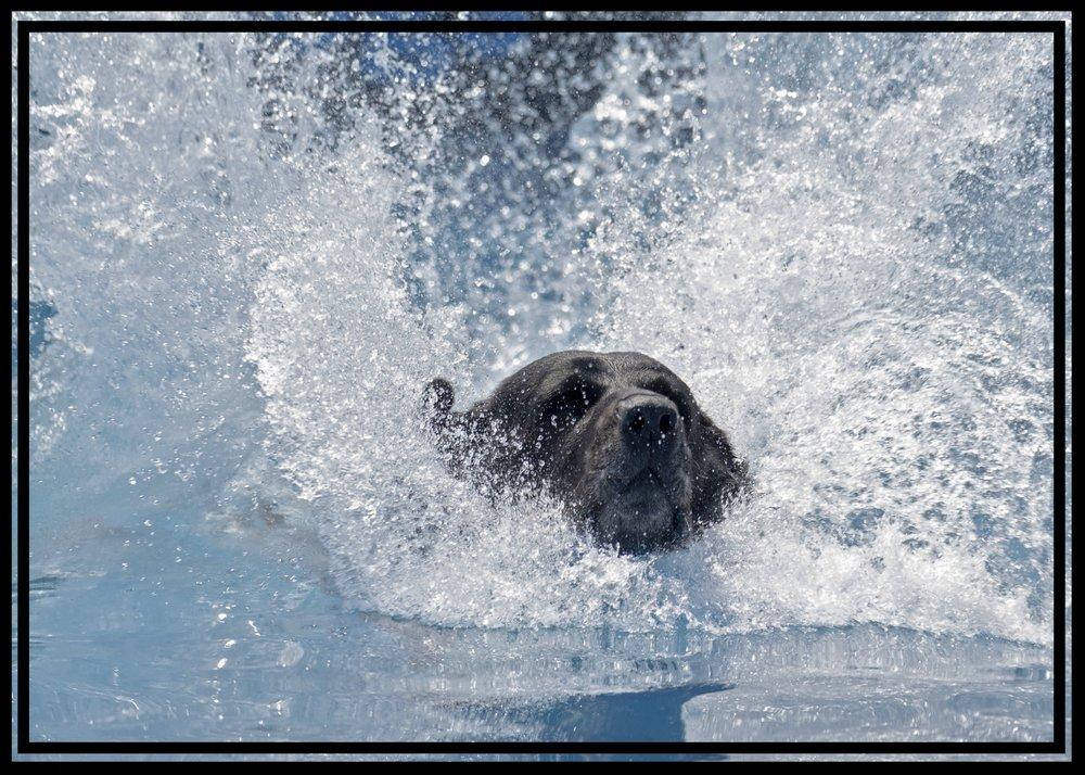 Splash Zone  Indoor Dog Pool - Openings & Reservations