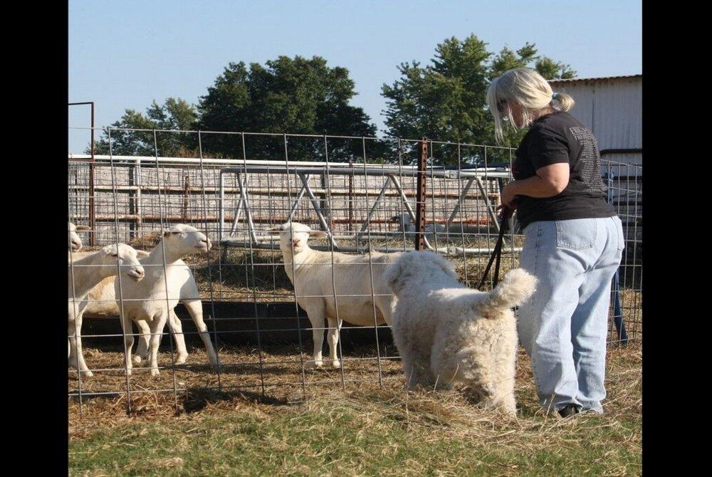 - Farm Dog Premiums
