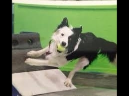 Flyball Tournament Registration