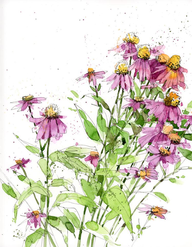 Echinacia.jpg