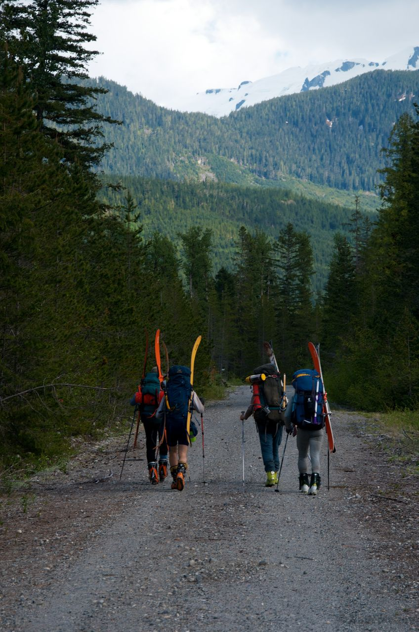 The group walking along segment of the long unused west branch of the Klinaklini forest service road.