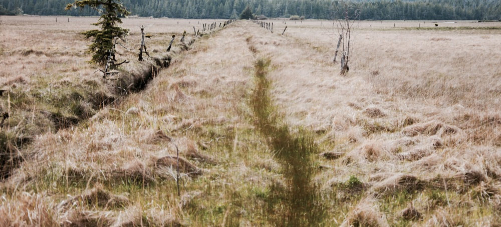 Is this the right path?                                                                                                      Photo of abandonned homestead fields in Cape Scott
