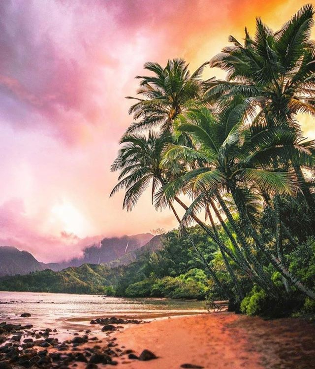 Kauai vibes remind us to slow down, reflect and receive the healing beauty of nature. Sometimes it's tough to remember how lucky we are when we have it sitting in front of us everyday. Take time to soak in all she has to offer... feel the love. 💜🌺#kauailove #kauailife #gratitude #kauai #Repost @visit.hawaii