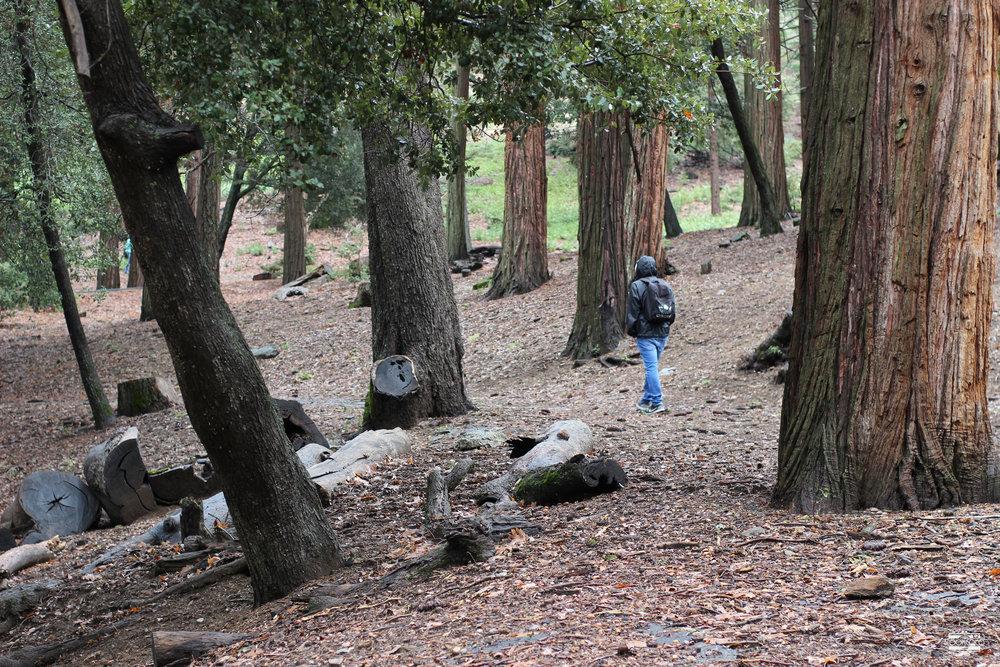 Palomar+Mountain.jpeg