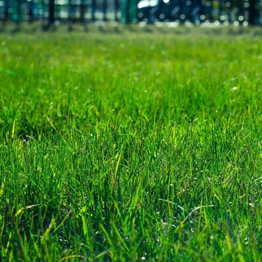 lawn-327333.jpg