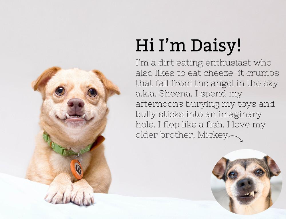 About Daisy.jpg