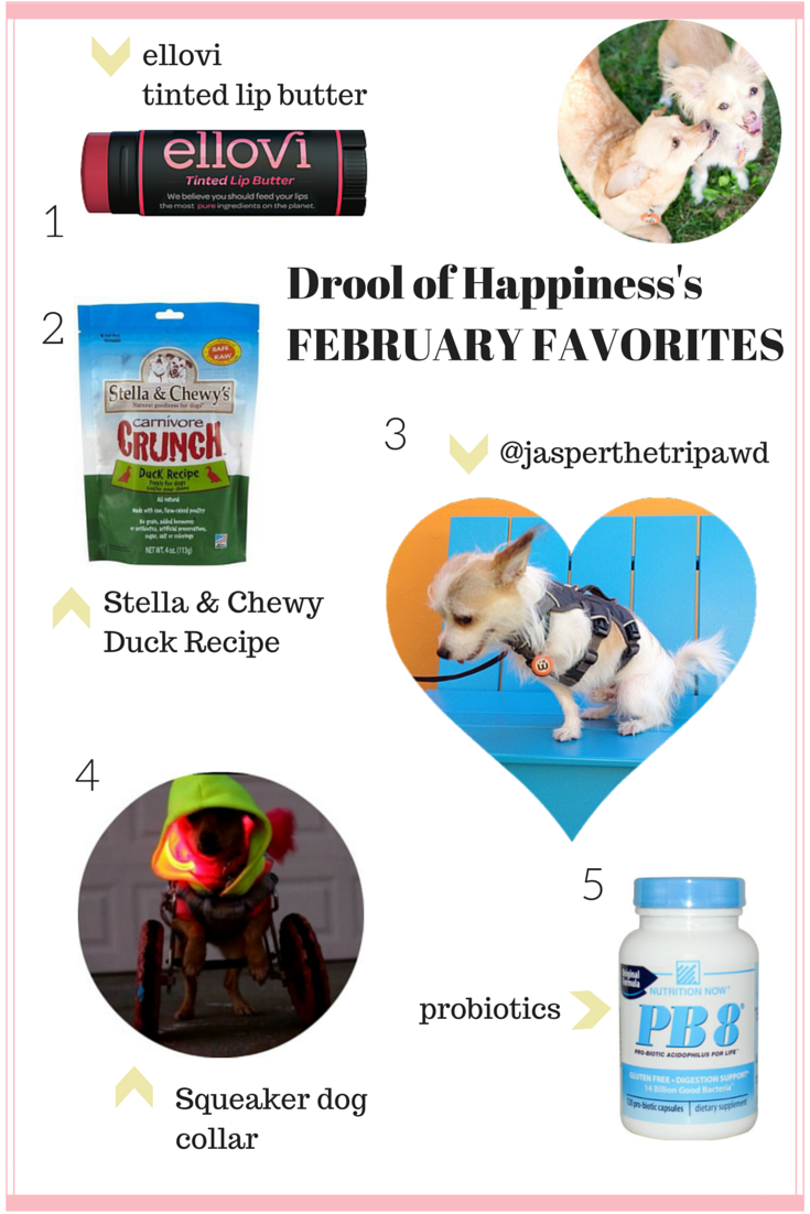 Drool of  Happiness's blog February Favorites 2015.  Brands include ellovi, Stella & Chewy's, Squeaker Dogs.