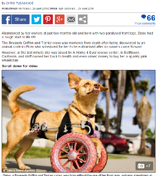 Dailymail UK talks about @underbiteunite and her adoption wheels and of course her pink sparkly doggy wheel cart