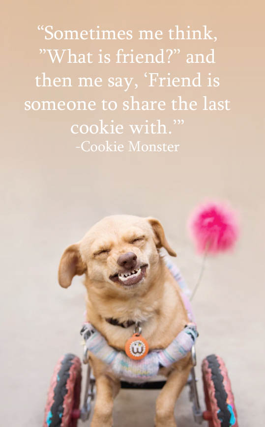 "Majestic Monday by @underbiteunite for International Dog Biscuit Appreciation day. ""Sometime me think, 'What is friend?' and then me say, 'Friend is someone to share the last cookie with."" - Cookie Monster"