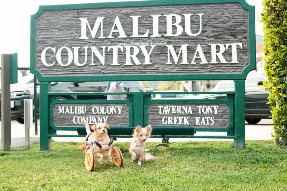 @toothfairypixie and @underbiteunite at Malibu Country Mart for their meet and greet.