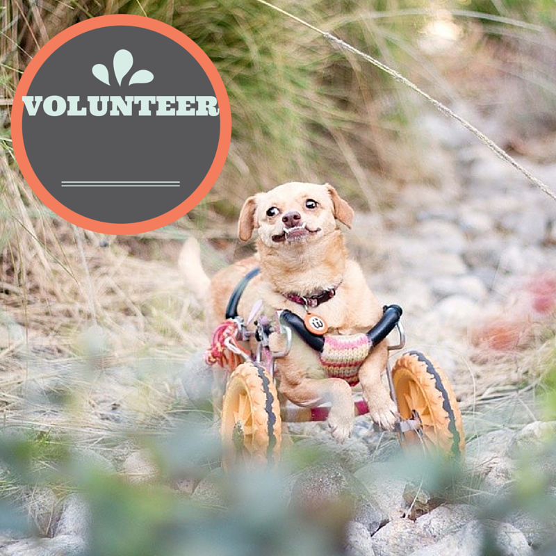 5 ways you can help an animal shelter l Volunteer