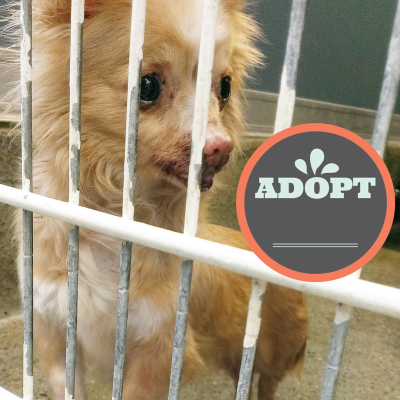 5 ways you can help an animal shelter l Adopt