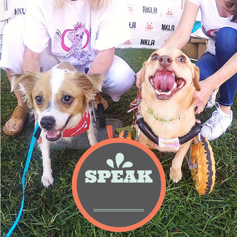 5 ways you can help an animal shelter l Speak up