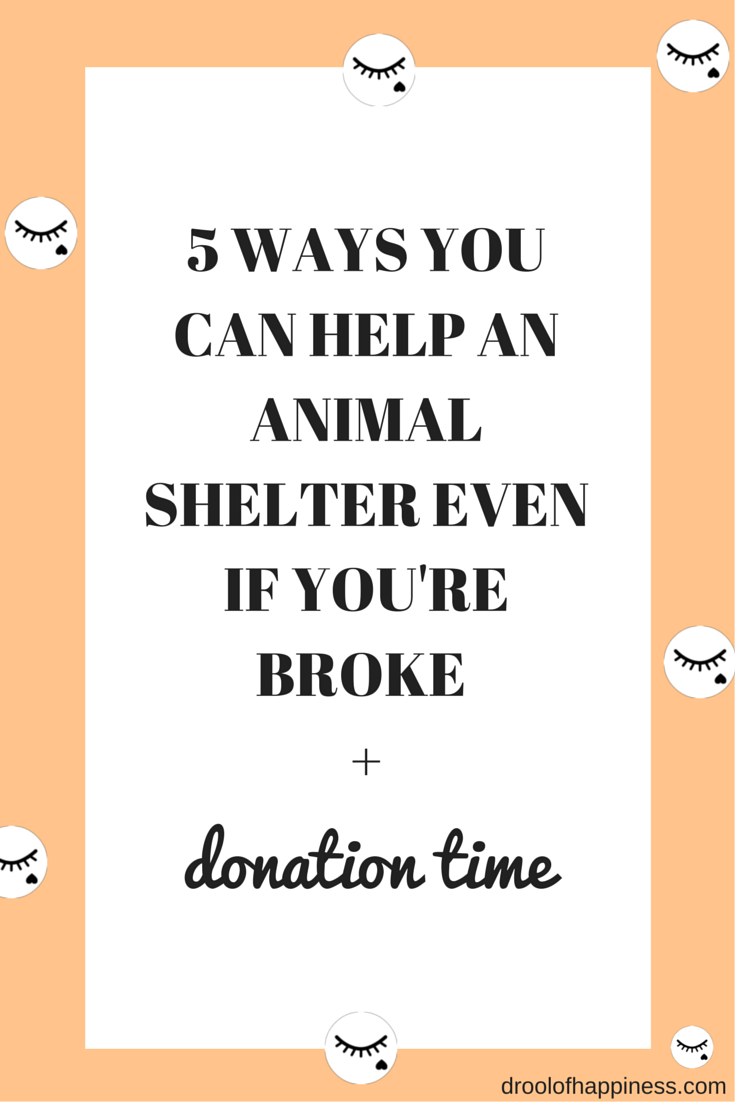 5 ways you can help an animal shelter even if you're broke presented by Drool of Happiness