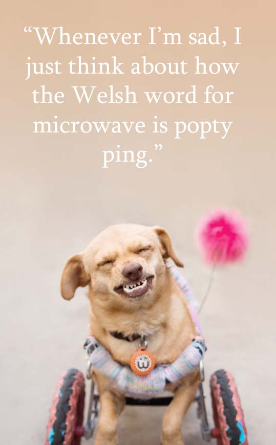"Majestic Monday, a fun quote presented by @underbiteunite. ""Whenever I'm sad, I just think about how the Welsh word for microwave is popty ping."""