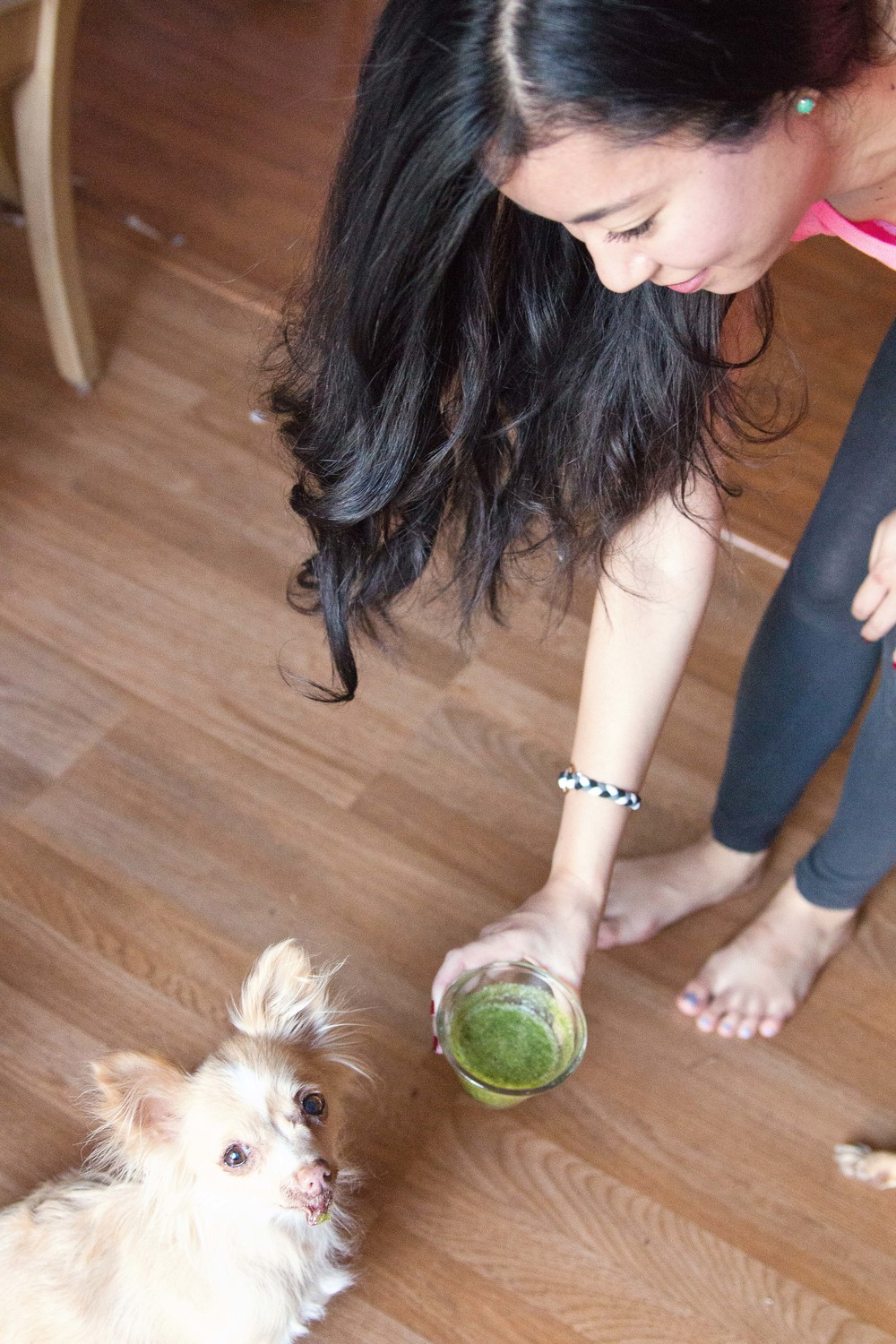 Chihuahua enjoying her green juice for dogs.