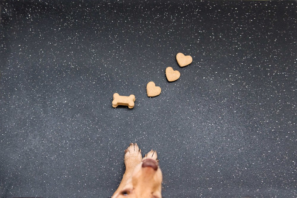 @underbiteunite with homemade peanut butter dog biscuits