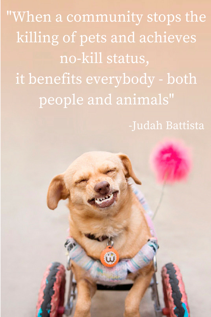 "Majestic Monday quote by Daisy Underbite. ""When a community stops the killing of pets and achieves no-kill status, it benefits everybody - both people and animals"" Judah Battista"