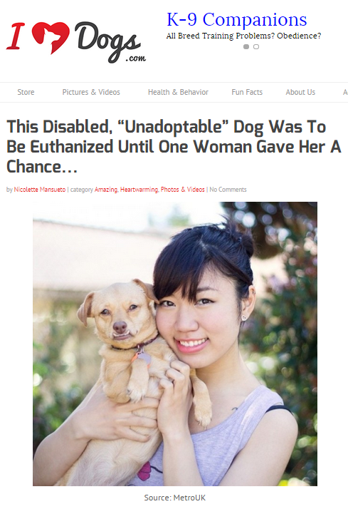 iheartdogs.com featured Daisy Underbite's story about her dog wheel cart and disabilities.