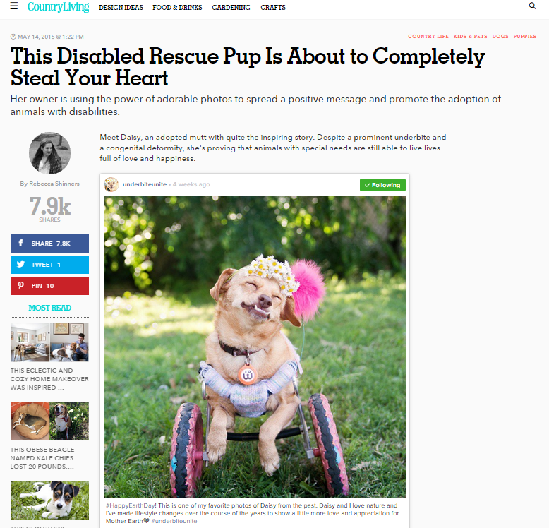 Country Living's story about Daisy Underbite and her dog wheel cart and disabilities