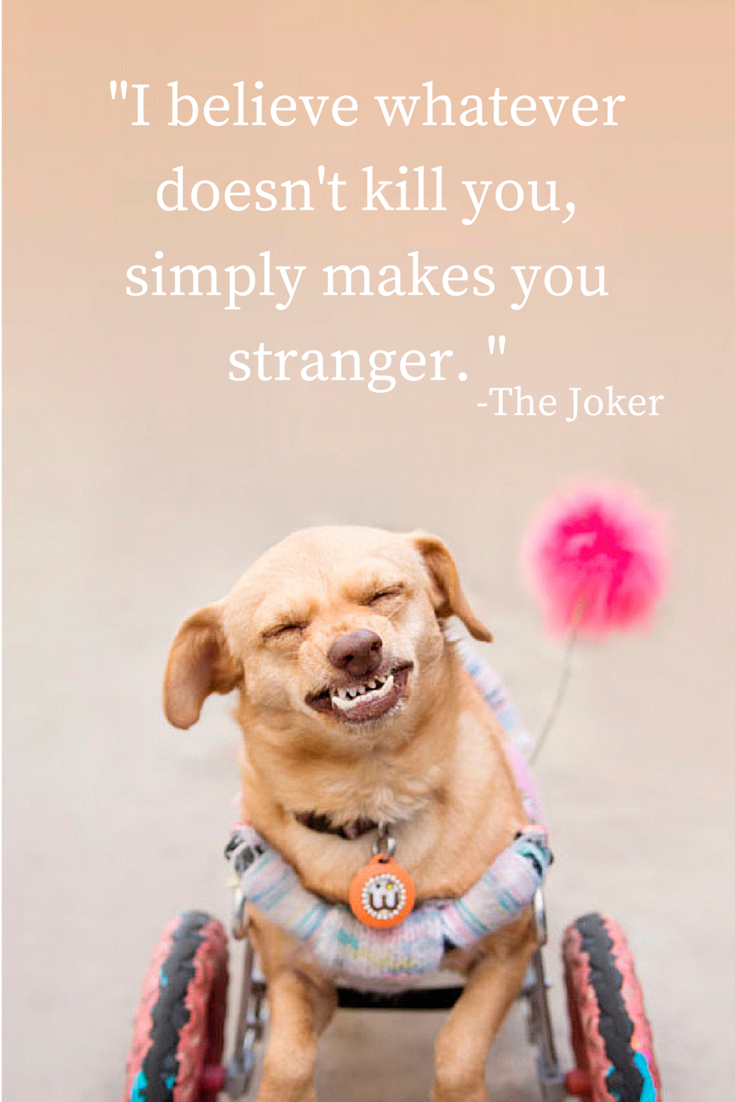 "Majestic Monday - a quote presented by Daisy Underbite to help make your Monday brighter. "" I believe whatever doesn't kill you simply makes you stranger."" The Joker"