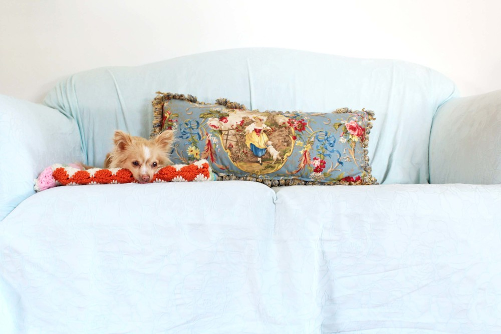 Home essentials for dog owners - couch slipcover