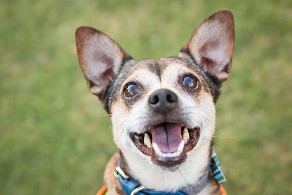 Adopt a shelter dog month - mutt