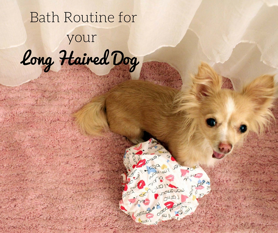 Bath routine for your long haired dog